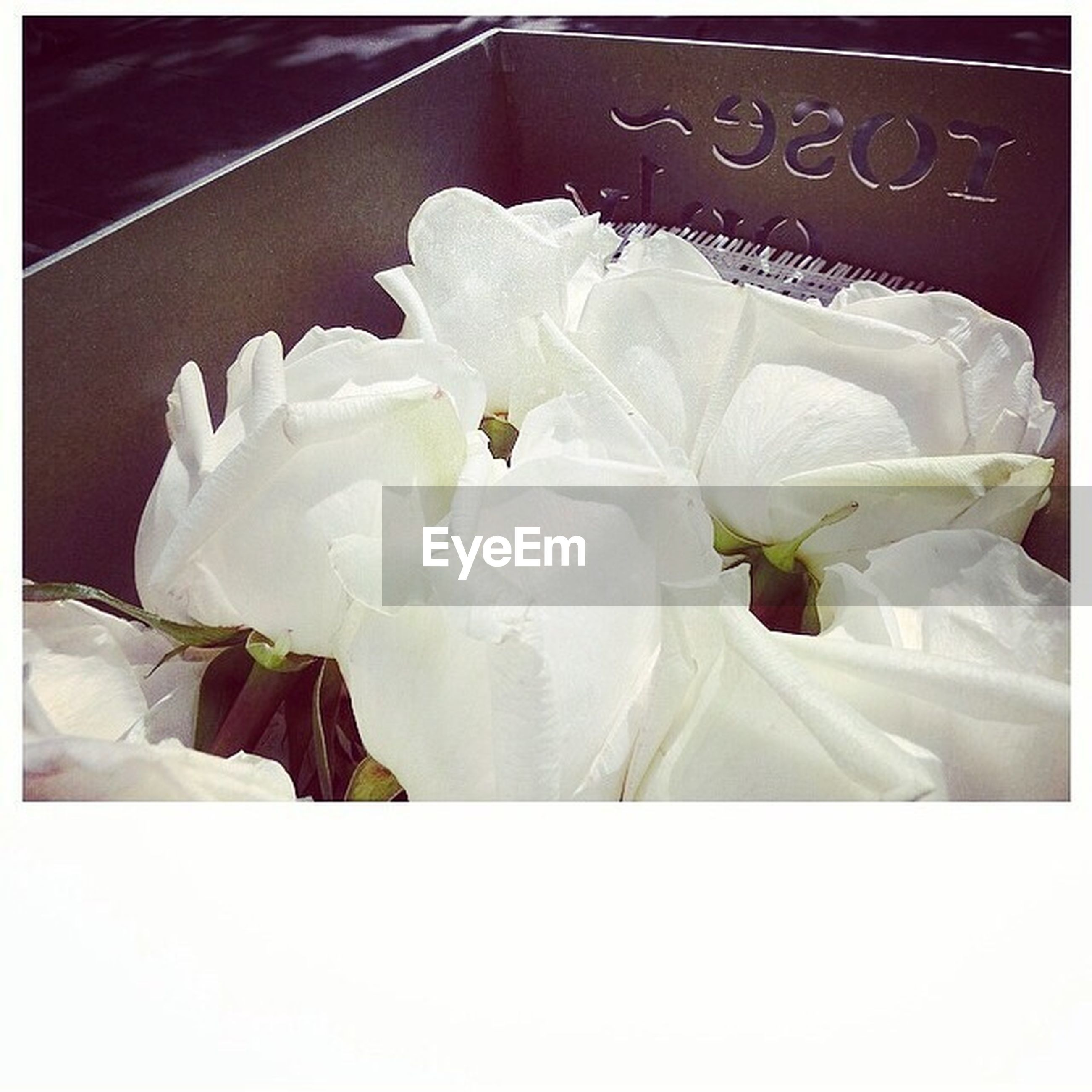 transfer print, flower, white color, petal, fragility, flower head, auto post production filter, close-up, indoors, white, freshness, no people, paper, beauty in nature, nature, high angle view, day, text, studio shot, softness