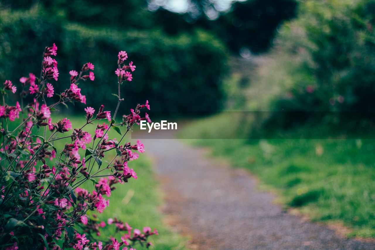 plant, flower, growth, nature, beauty in nature, outdoors, day, no people, focus on foreground, field, fragility, pink color, grass, green color, tree, close-up, flower head, freshness
