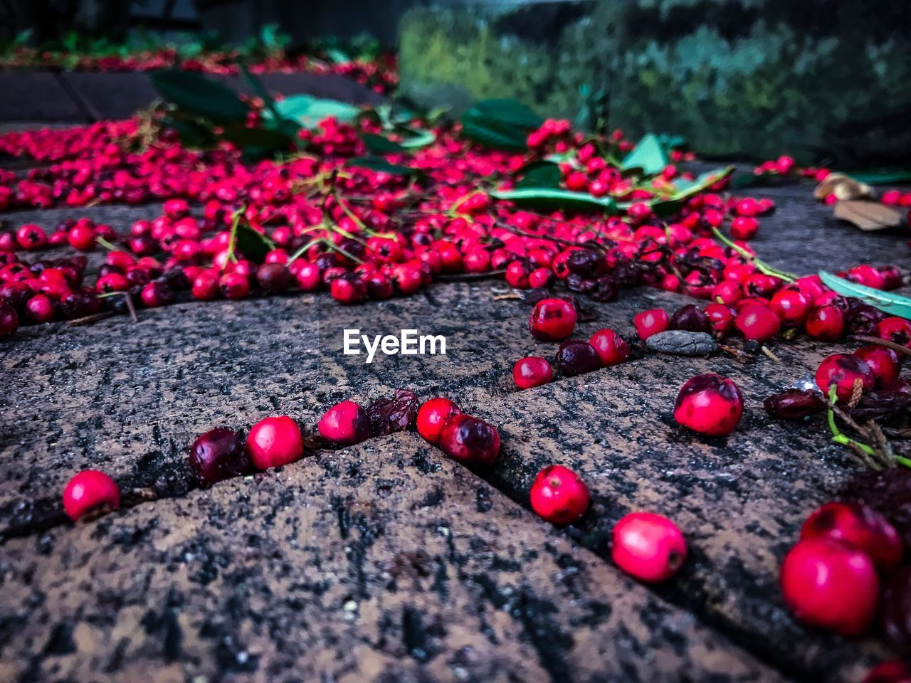 red, food and drink, fruit, food, no people, selective focus, outdoors, close-up, leaf, day, nature, freshness, healthy eating, beauty in nature