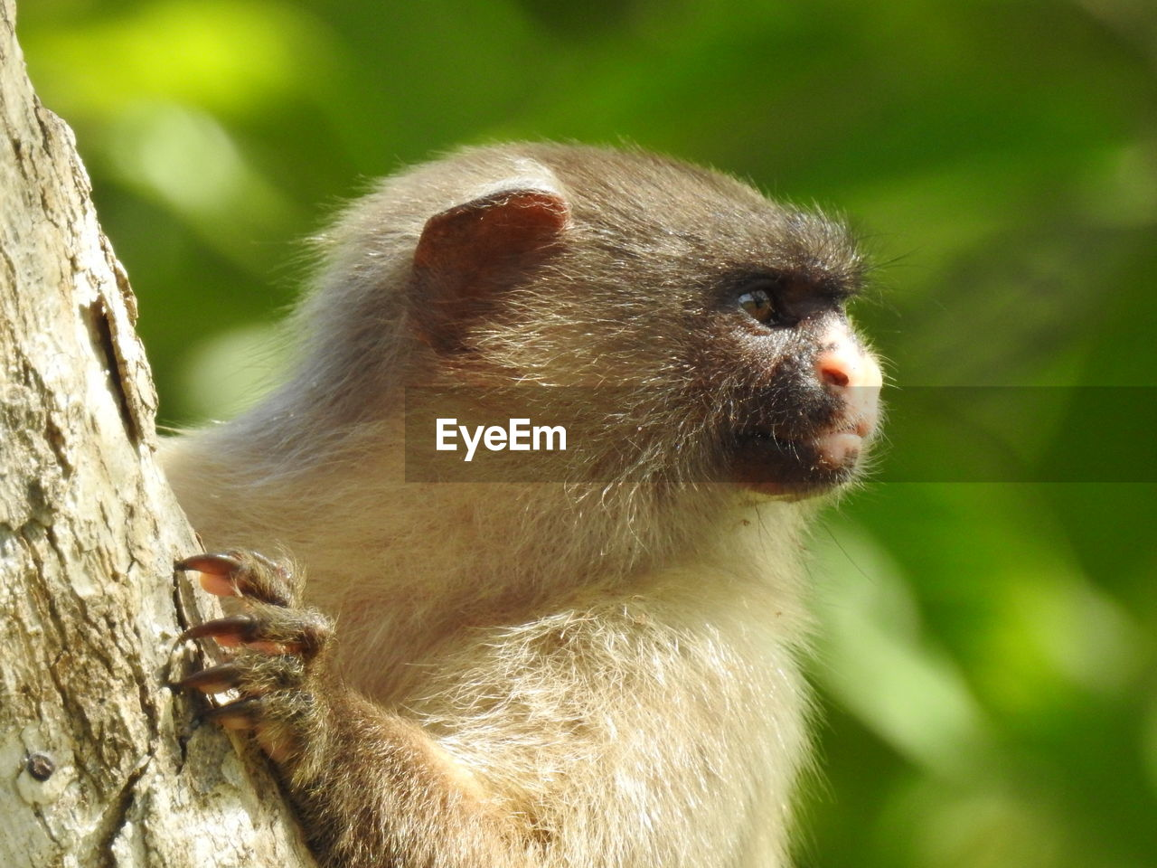 one animal, animal themes, animal wildlife, animal, animals in the wild, mammal, focus on foreground, primate, vertebrate, close-up, tree, day, no people, looking away, nature, looking, monkey, outdoors, zoology, plant, animal head, whisker