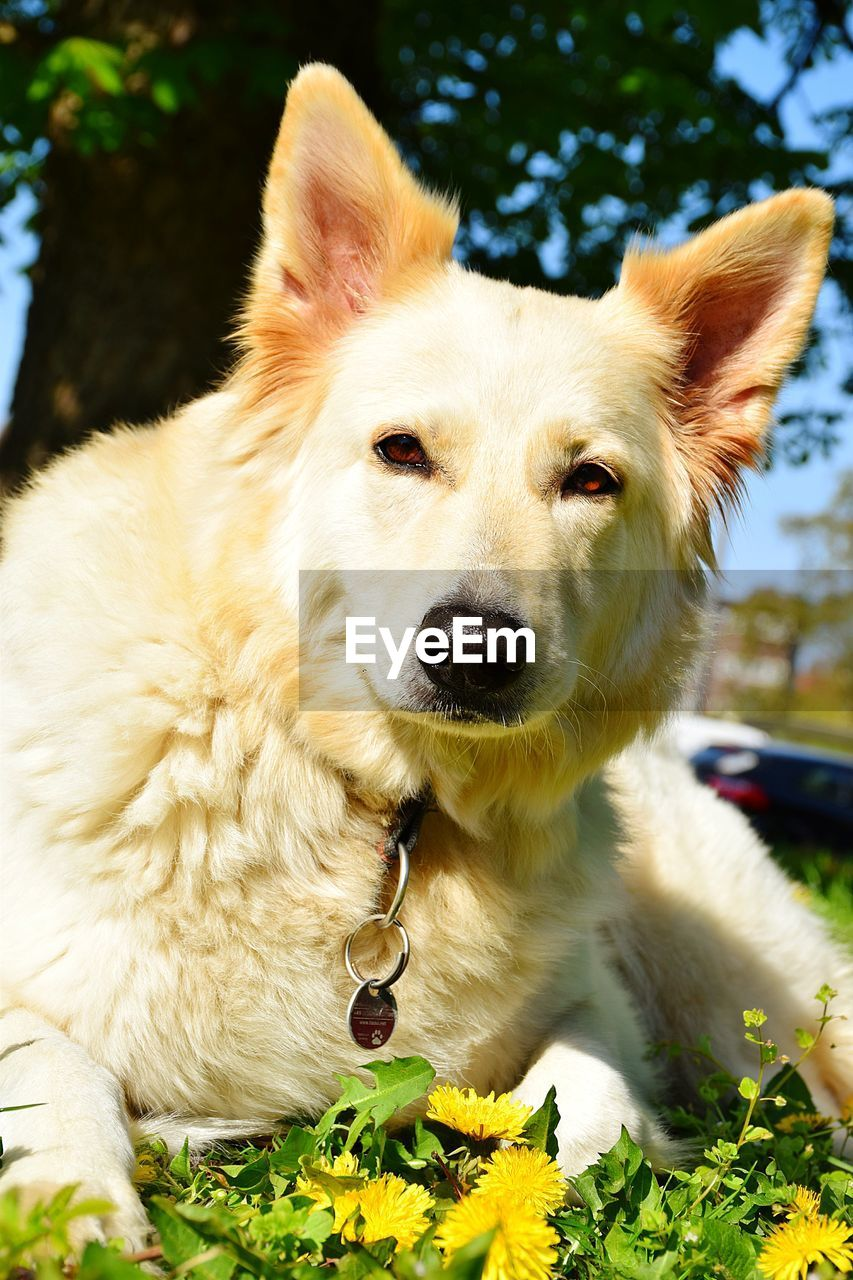 mammal, pets, canine, dog, domestic, one animal, animal themes, domestic animals, animal, vertebrate, plant, portrait, close-up, no people, focus on foreground, nature, day, relaxation, looking at camera, collar, animal head