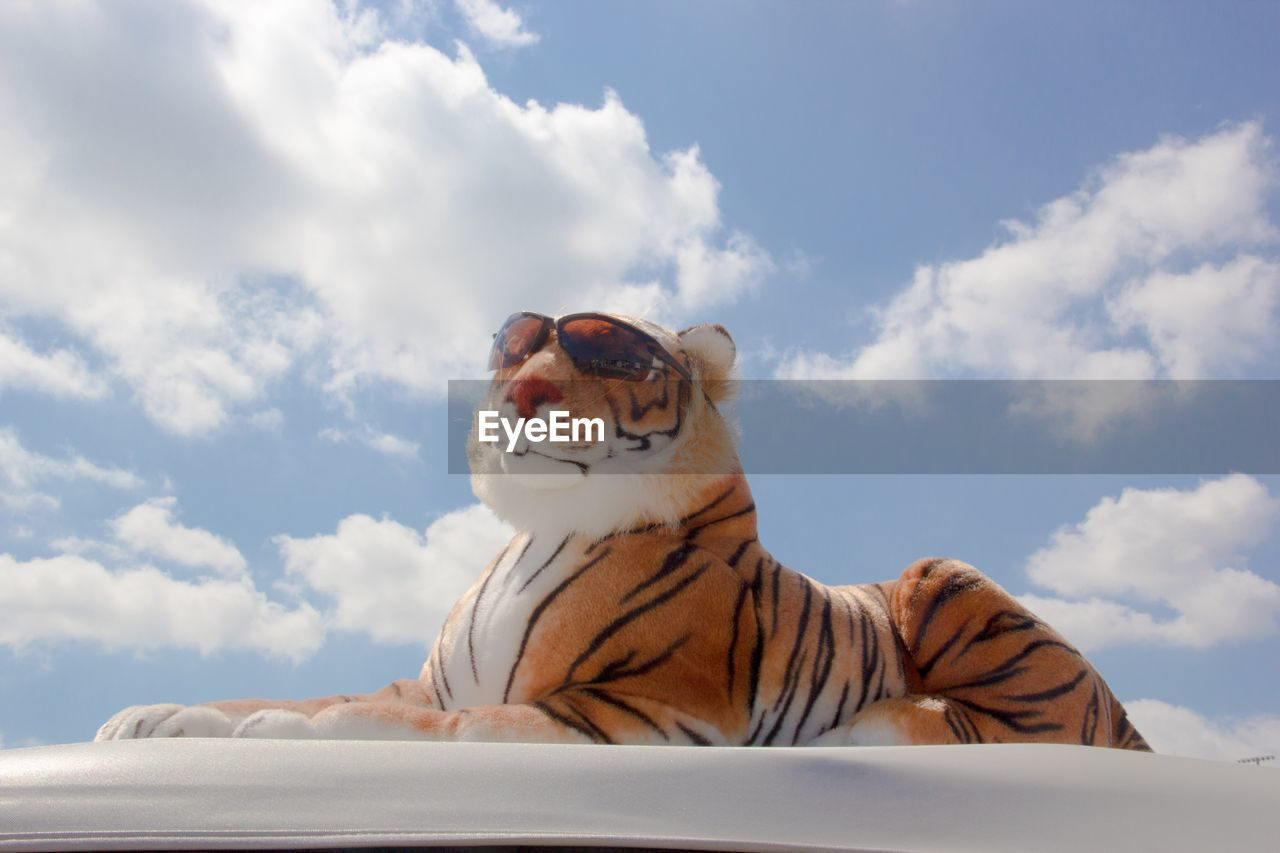 Stuffed Tiger With Sunglasses Against Sky During Sunny Day