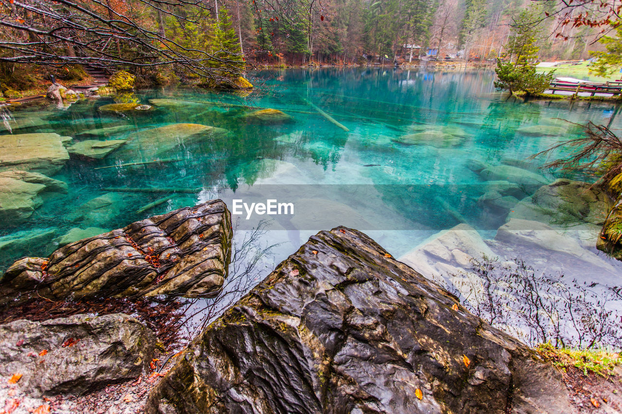 nature, beauty in nature, tree, water, scenics, tranquil scene, forest, outdoors, tranquility, rock - object, day, tree trunk, no people, travel destinations, physical geography, landscape, hot spring