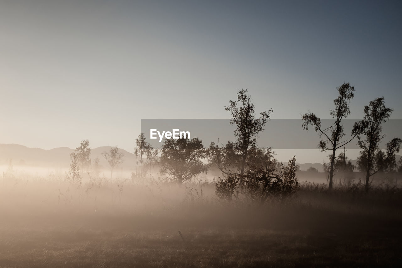 tree, plant, sky, tranquility, tranquil scene, beauty in nature, land, fog, environment, scenics - nature, field, landscape, no people, non-urban scene, nature, growth, copy space, day, hazy