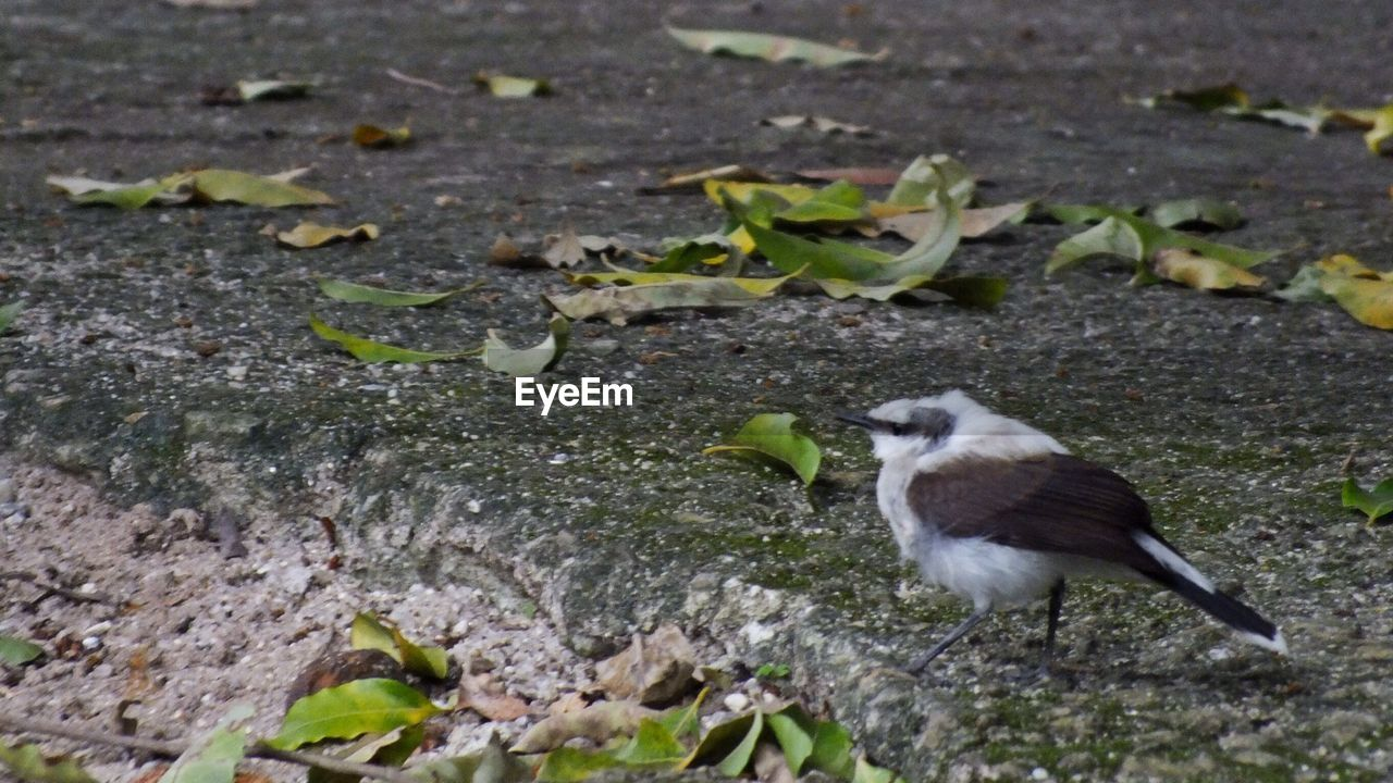 Close-up of bird standing on ground
