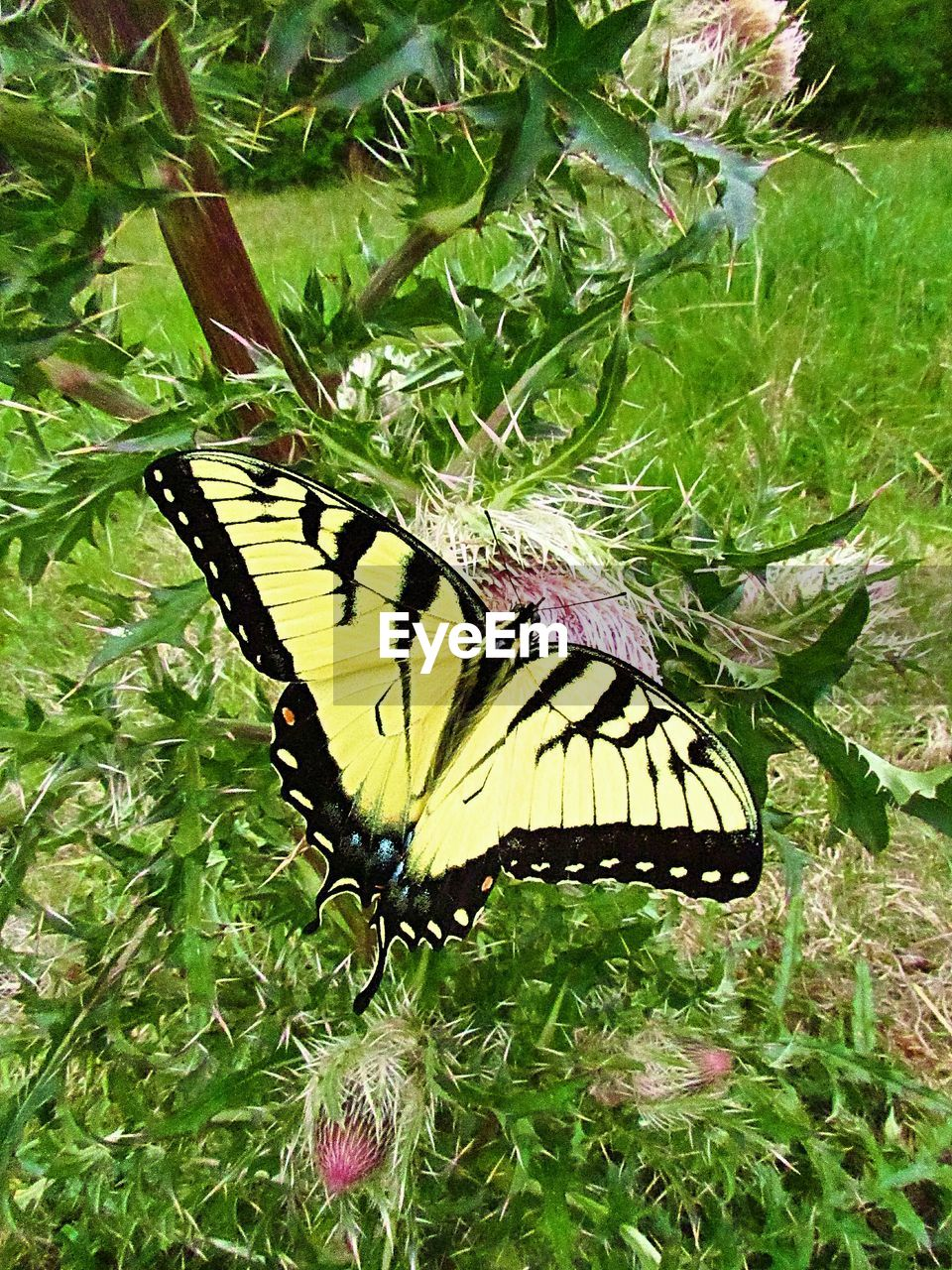 animal wildlife, animal themes, butterfly - insect, animal wing, animals in the wild, insect, animal, invertebrate, beauty in nature, plant, one animal, flower, nature, plant part, leaf, close-up, no people, day, growth, green color, outdoors, butterfly, pollination