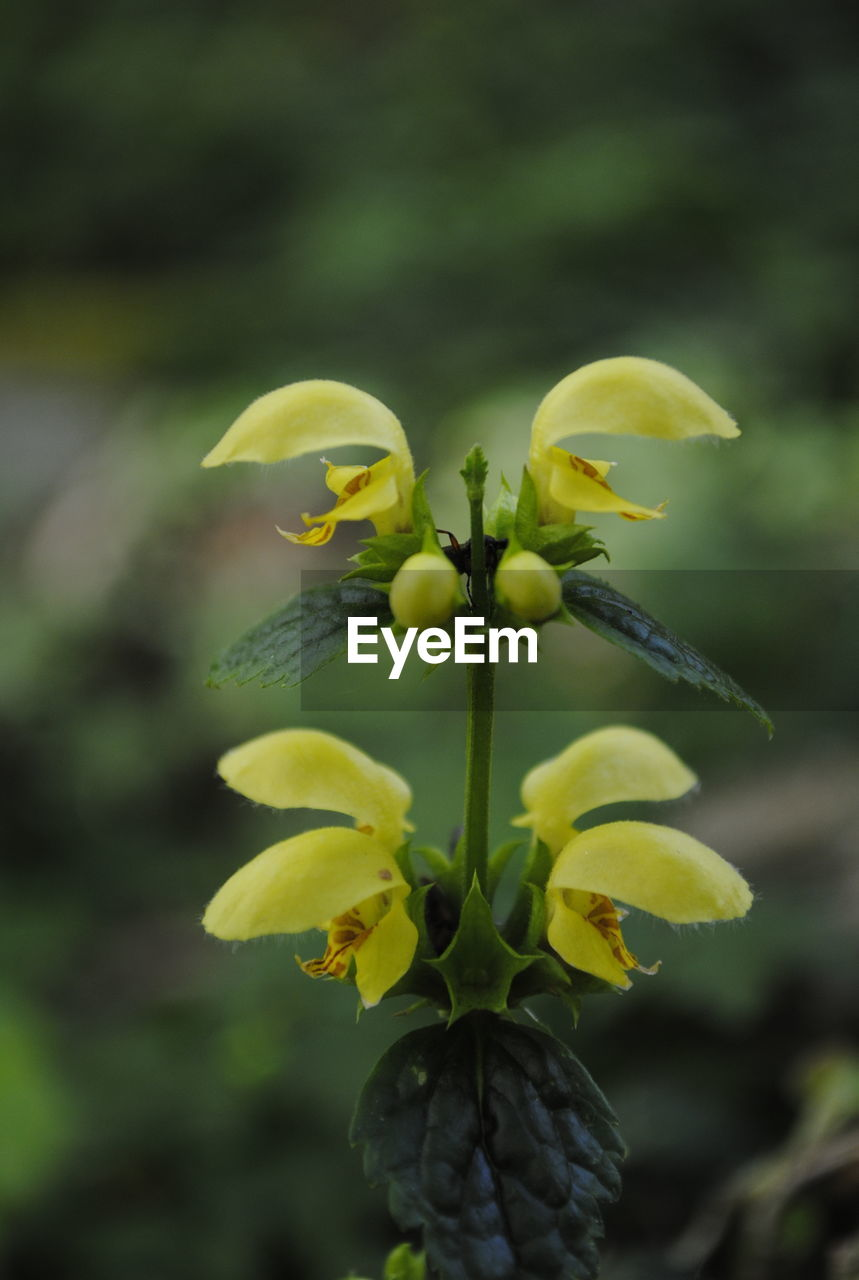 flower, growth, petal, fragility, yellow, nature, beauty in nature, plant, freshness, flower head, focus on foreground, outdoors, day, no people, green color, blooming, close-up