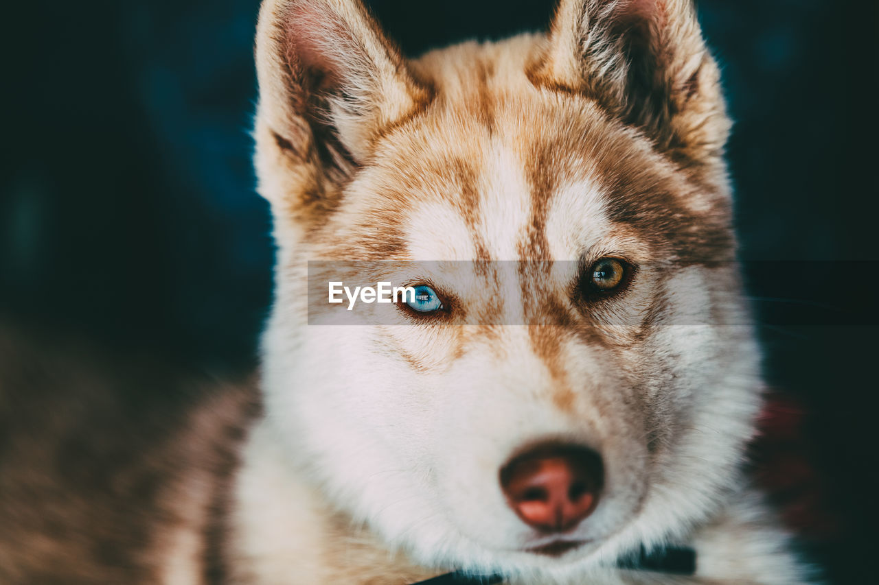one animal, animal themes, mammal, looking at camera, animal, vertebrate, portrait, pets, domestic animals, domestic, close-up, animal body part, focus on foreground, eye, dog, no people, canine, animal head, day, animal eye, whisker