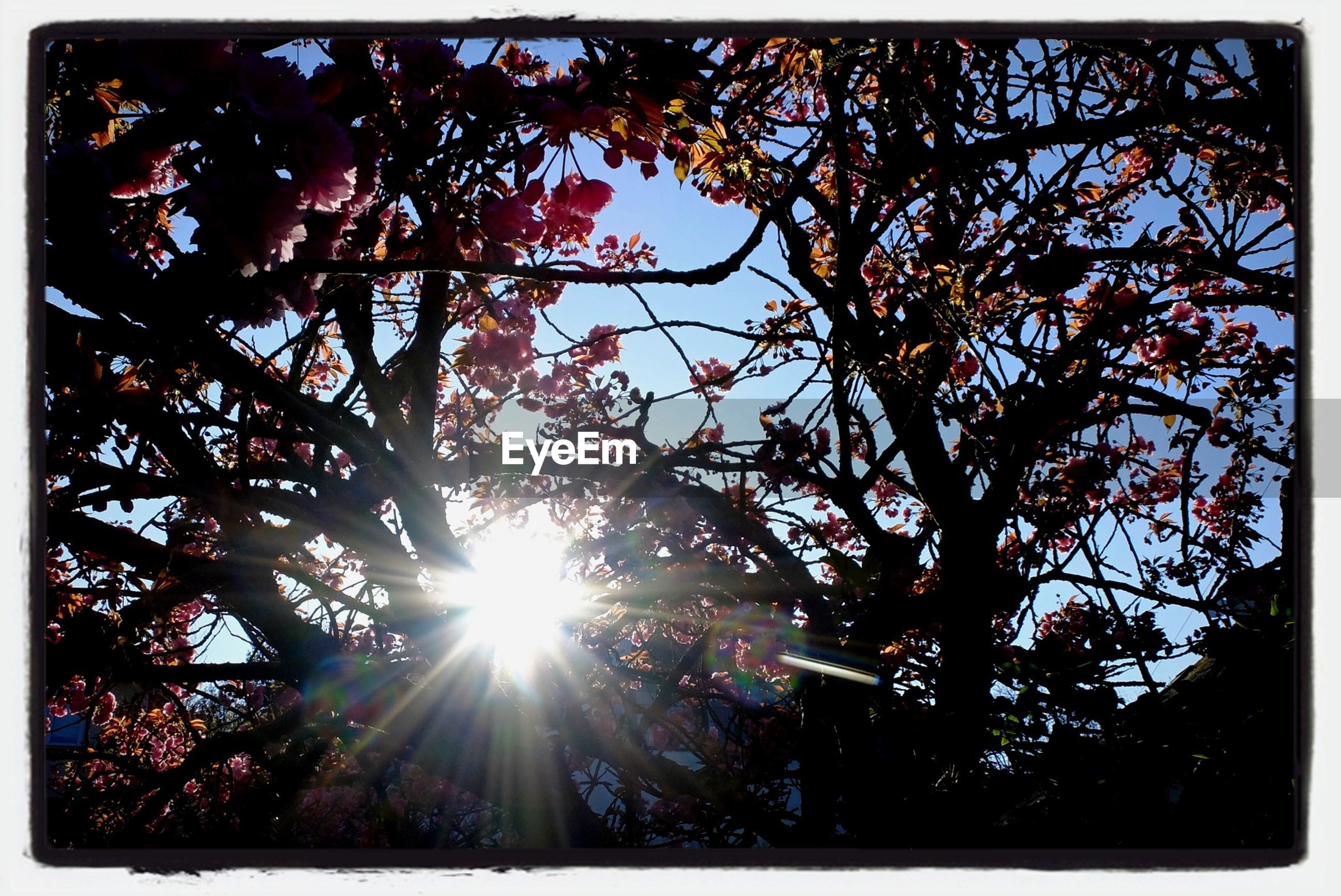 transfer print, sun, tree, low angle view, sunbeam, auto post production filter, sunlight, lens flare, branch, growth, nature, silhouette, sky, bright, outdoors, beauty in nature, no people, day, back lit, sunny