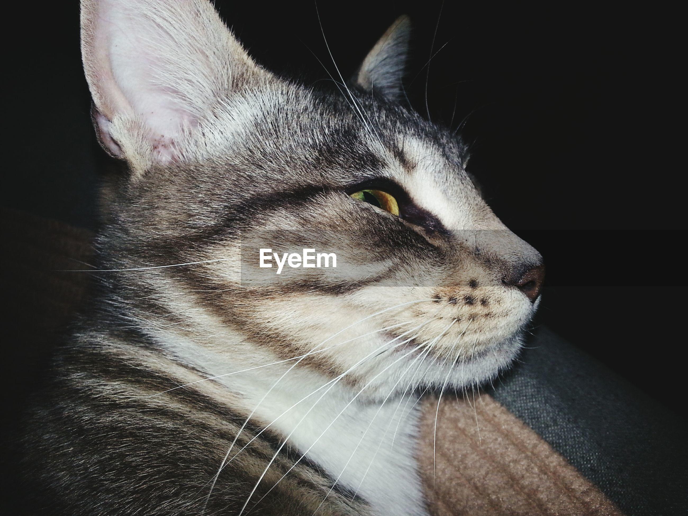 Close-up of cat in darkroom