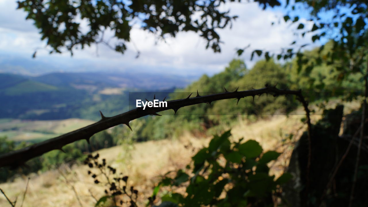 safety, focus on foreground, protection, day, outdoors, barbed wire, nature, tree, no people, defocused, sky, close-up