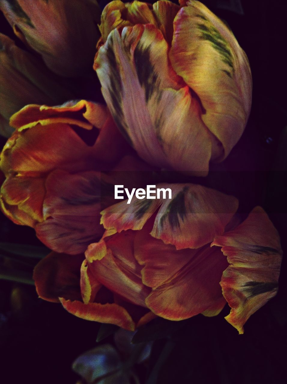 flower, petal, beauty in nature, nature, no people, flower head, fragility, plant, growth, freshness, close-up, blooming, outdoors, day