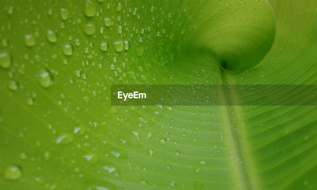 green color, close-up, leaf, full frame, plant part, drop, plant, freshness, backgrounds, wet, no people, beauty in nature, nature, leaf vein, water, growth, pattern, food and drink, extreme close-up, outdoors, rain, raindrop, purity