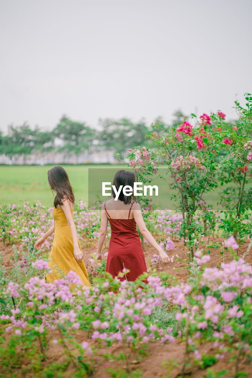 plant, flower, flowering plant, real people, lifestyles, beauty in nature, young women, nature, sky, growth, young adult, leisure activity, adult, rear view, women, land, day, field, two people, three quarter length, outdoors, couple - relationship, hairstyle