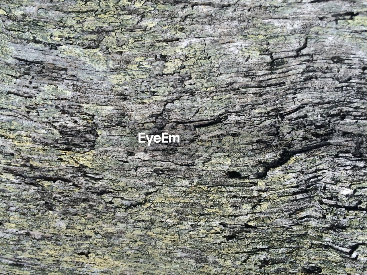Full frame shot of tree bark