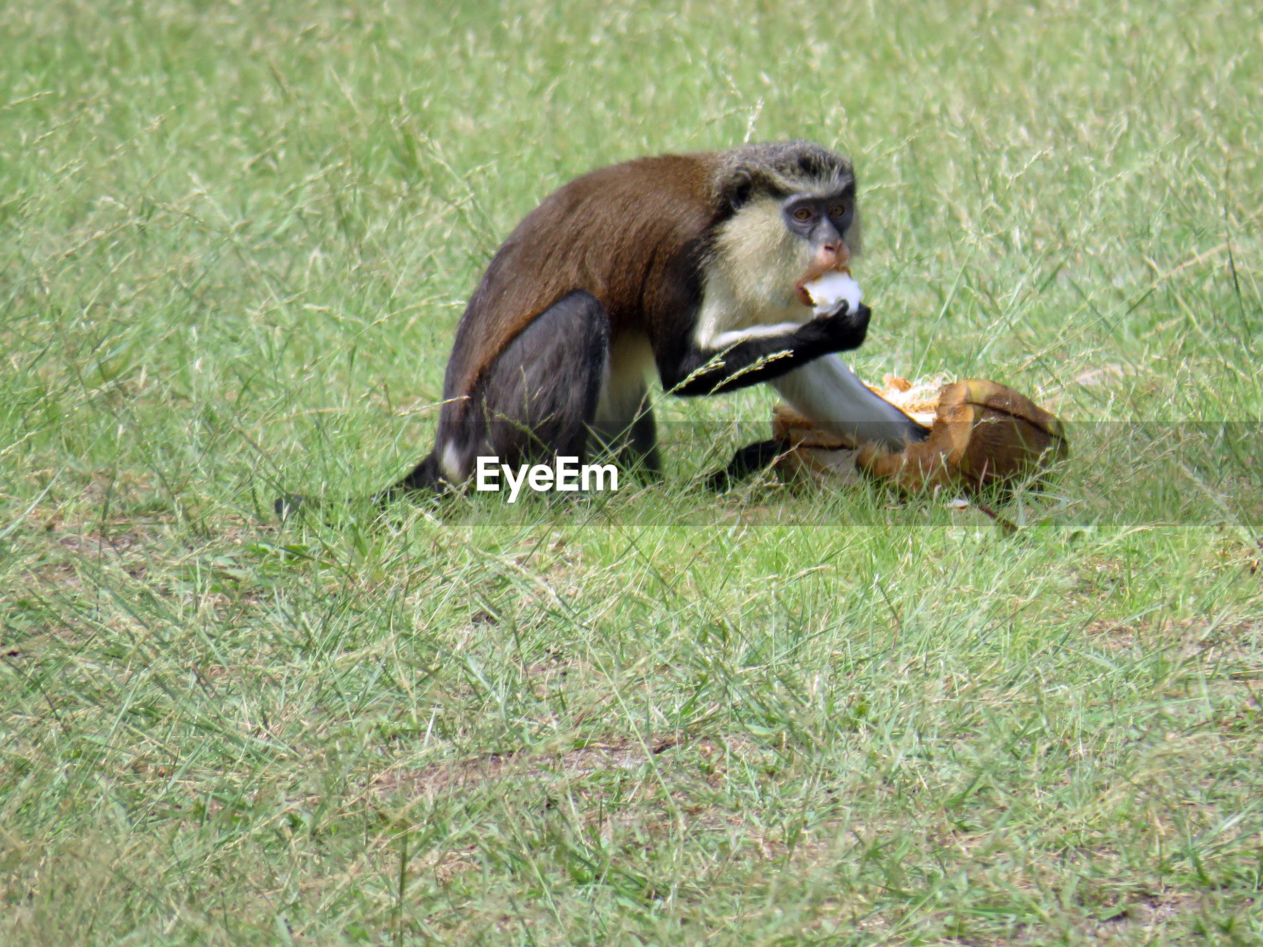 Monkey sitting on field