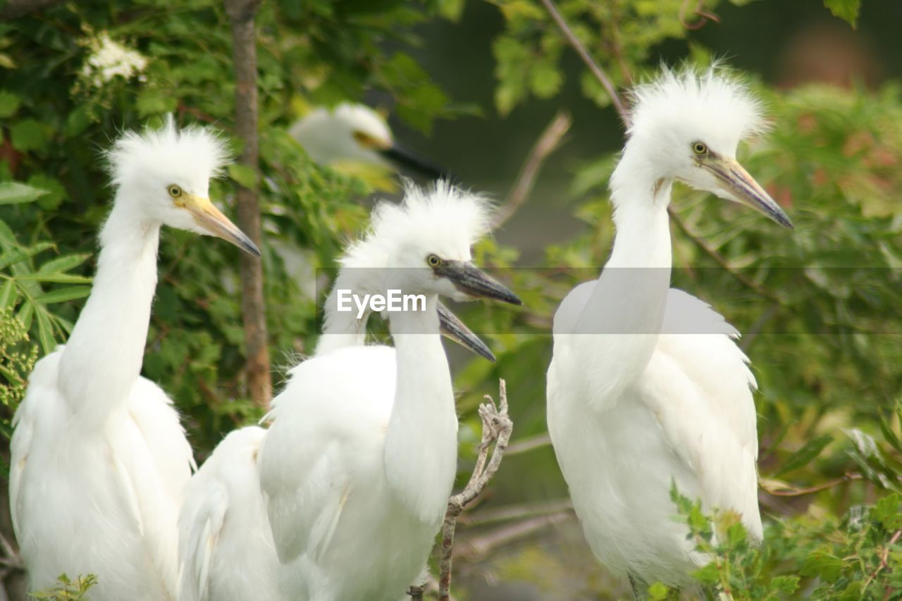 Egrets By Plants