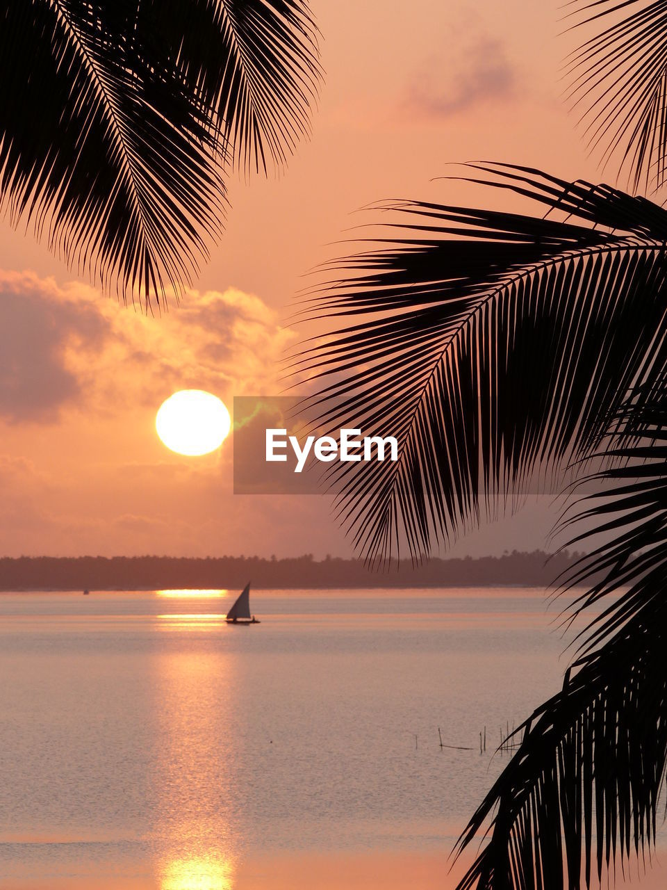 sky, sunset, palm tree, water, tree, tropical climate, sea, scenics - nature, silhouette, beauty in nature, tranquility, nature, tranquil scene, horizon over water, beach, orange color, plant, palm leaf, leaf, sun, outdoors