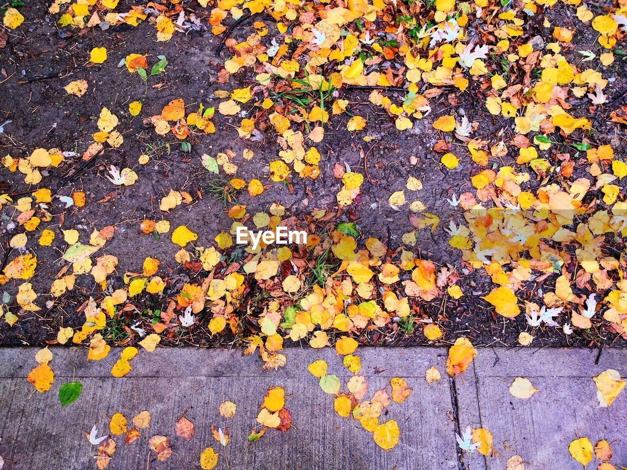 Close-Up Of Autumn Leaves Fallen On Street