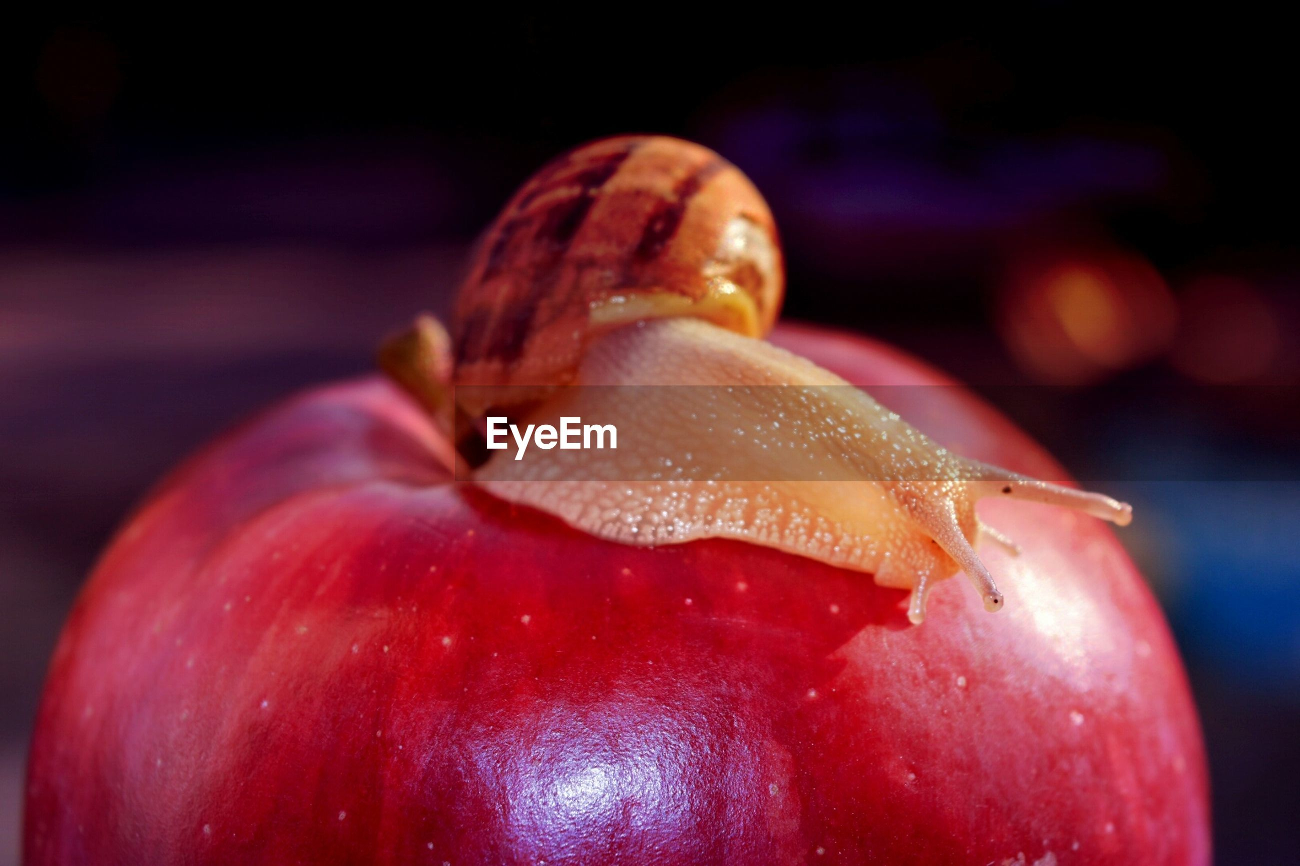 close-up, red, focus on foreground, no people, food and drink, food, healthy eating, nature, freshness, animal themes, outdoors, day