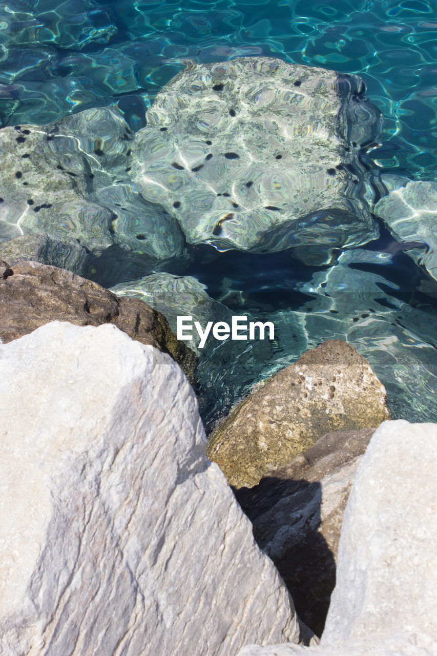 High angle view of sea urchins over rock in undersea