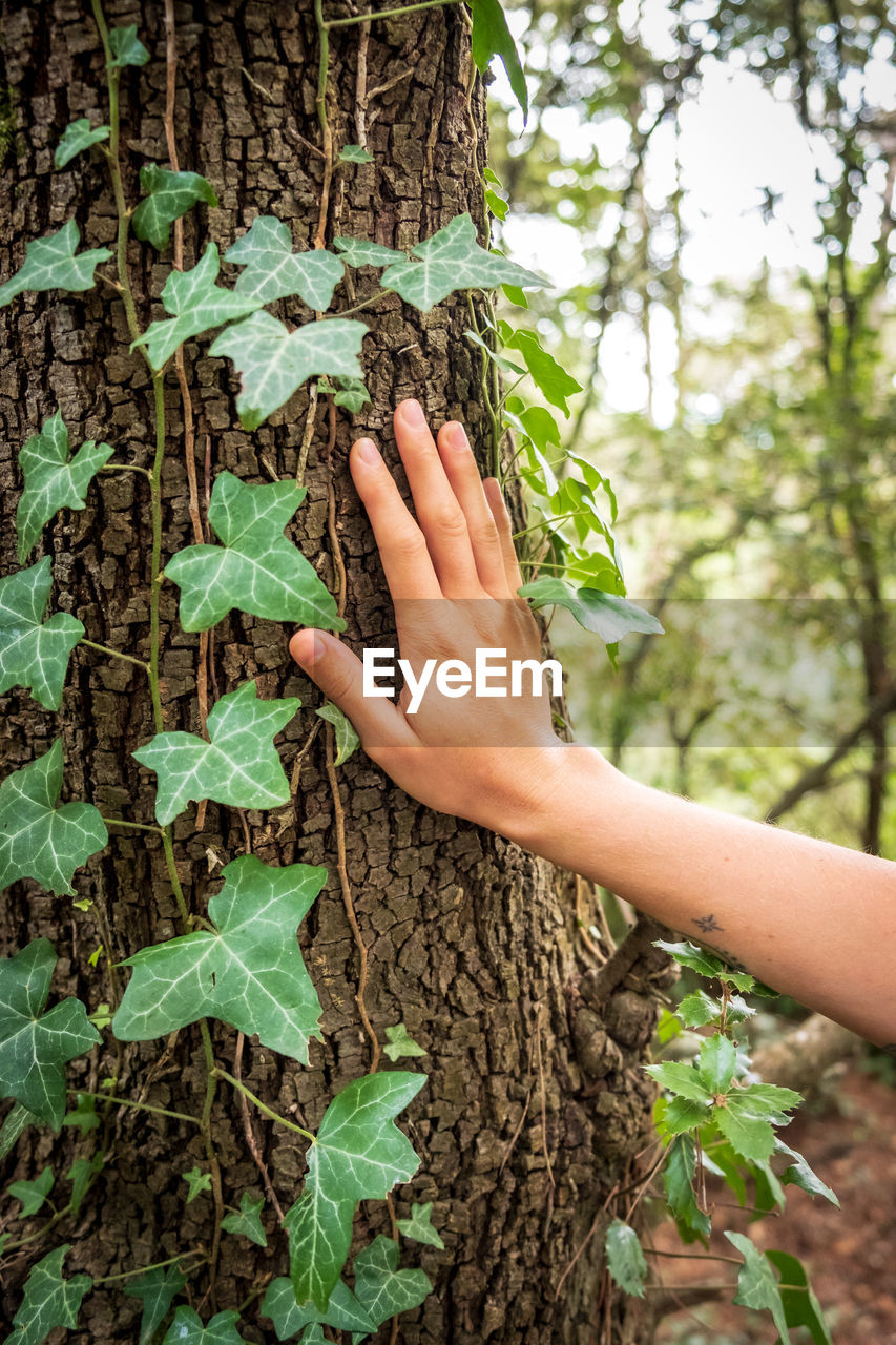 plant, one person, leaf, plant part, hand, human hand, tree, human body part, trunk, green color, growth, tree trunk, nature, real people, day, leisure activity, touching, holding, lifestyles, outdoors, body part, finger, obscured face, human limb, care