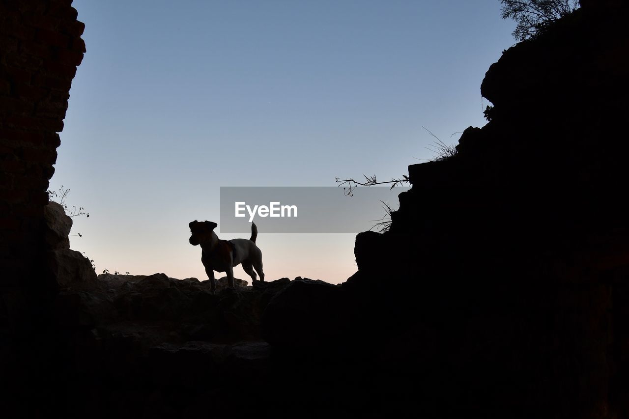 mammal, animal themes, animal, domestic animals, domestic, silhouette, sky, vertebrate, pets, one animal, copy space, livestock, rock, clear sky, nature, rock - object, solid, dog, no people, standing, outdoors, herbivorous