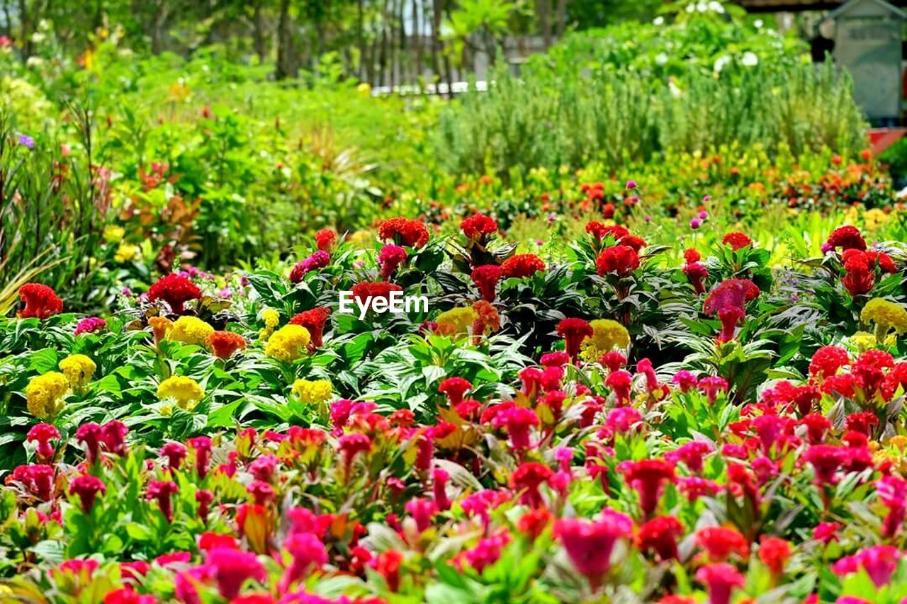 growth, flower, nature, plant, beauty in nature, freshness, red, fragility, no people, outdoors, tranquility, summer, flowerbed, blooming, flower head, day, botanical garden