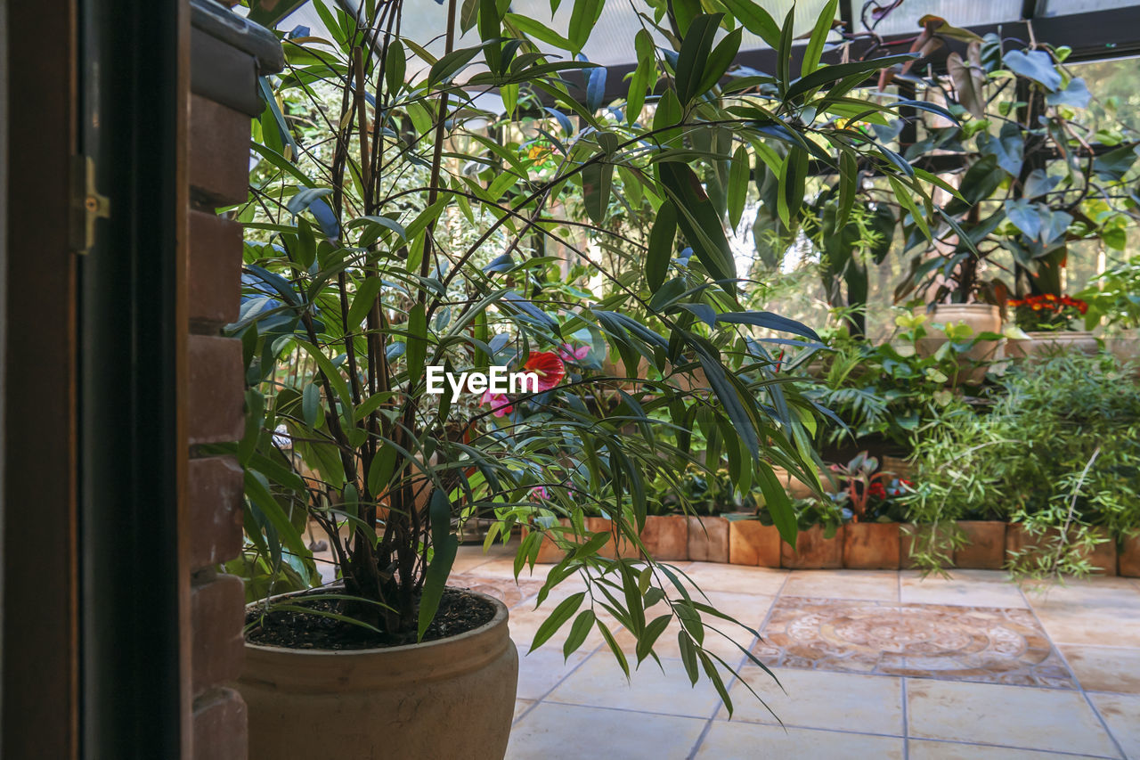 POTTED PLANTS IN YARD AGAINST TREES