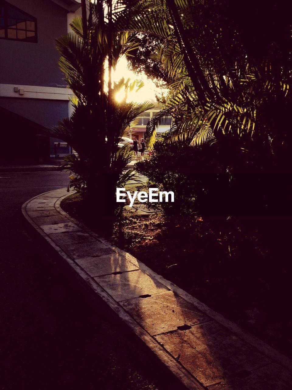 night, tree, no people, palm tree, outdoors, illuminated, building exterior, architecture, nature, city, sky