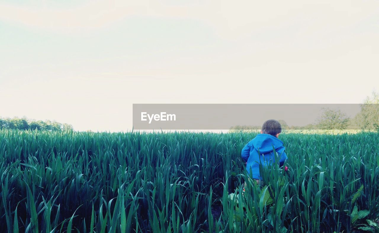 Rear view of boy amidst plants on field against sky
