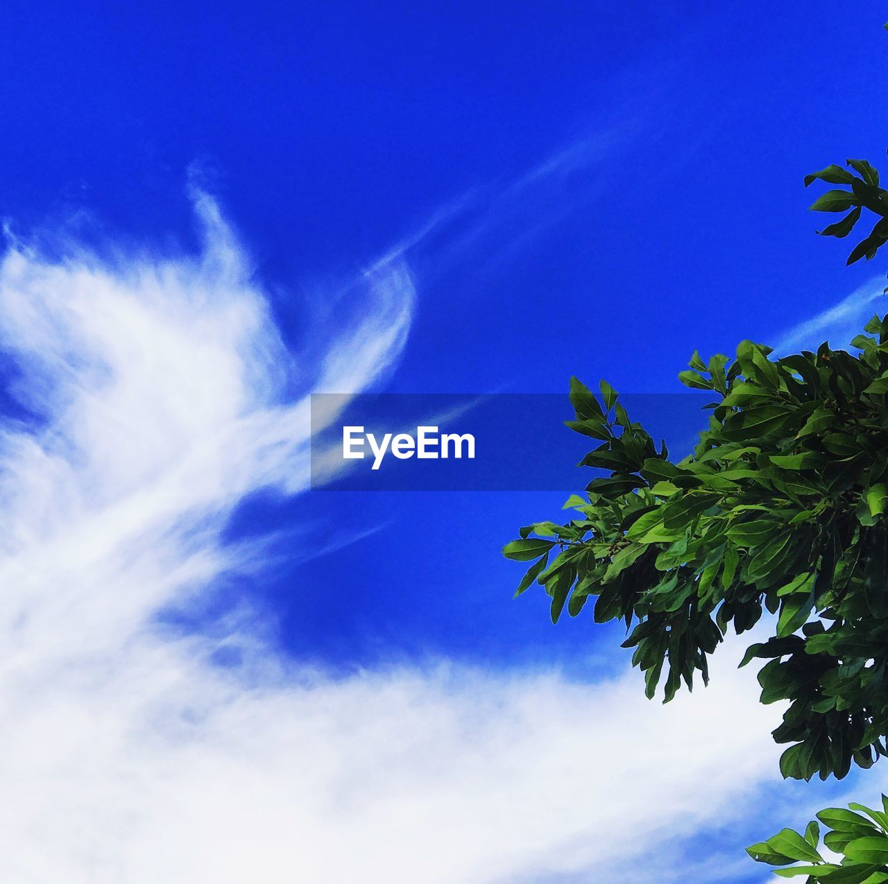 sky, blue, nature, growth, beauty in nature, low angle view, no people, leaf, cloud - sky, tree, day, tranquility, plant, outdoors, scenics, freshness