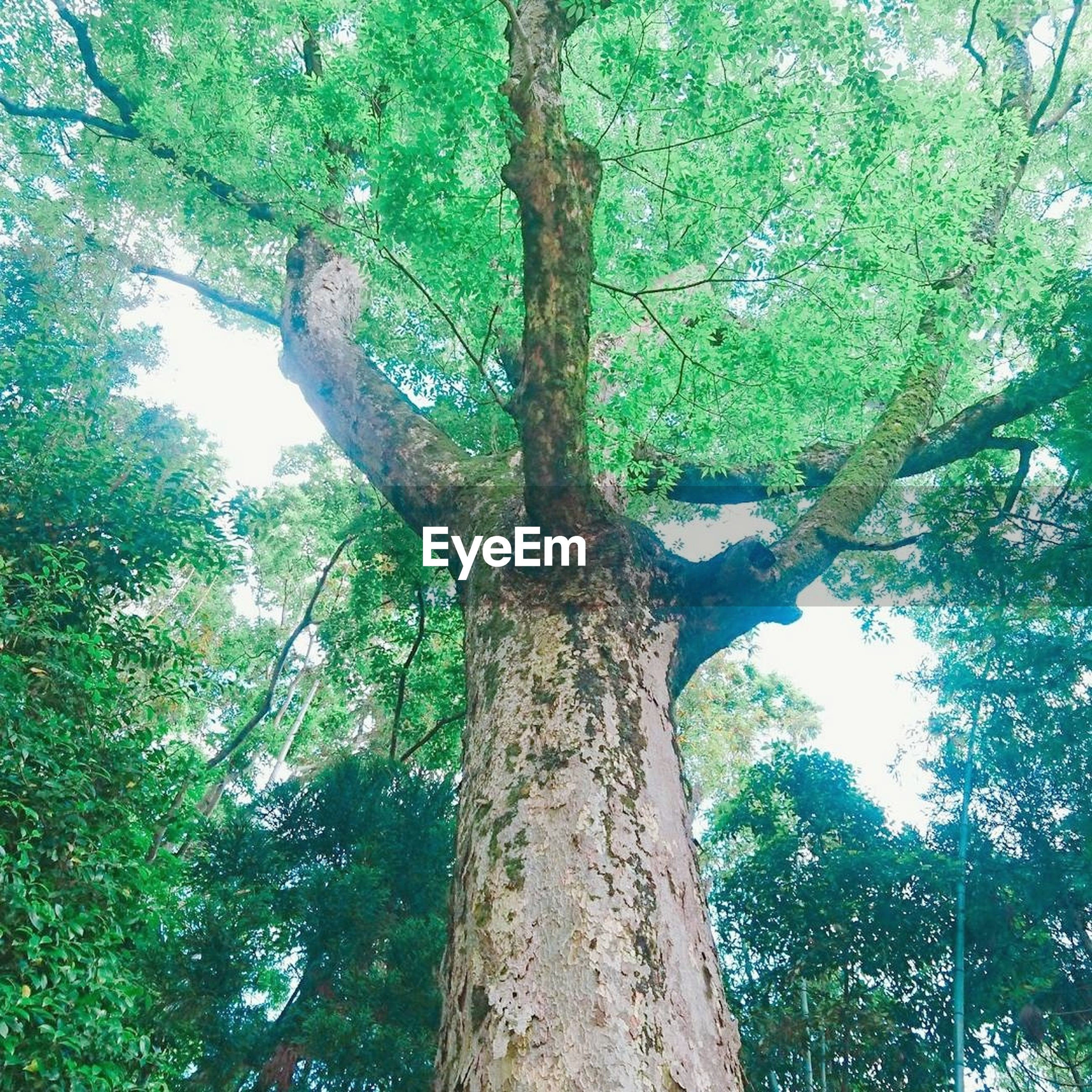 tree, tree trunk, nature, growth, branch, green color, day, forest, beauty in nature, low angle view, outdoors, no people, tranquility, scenics