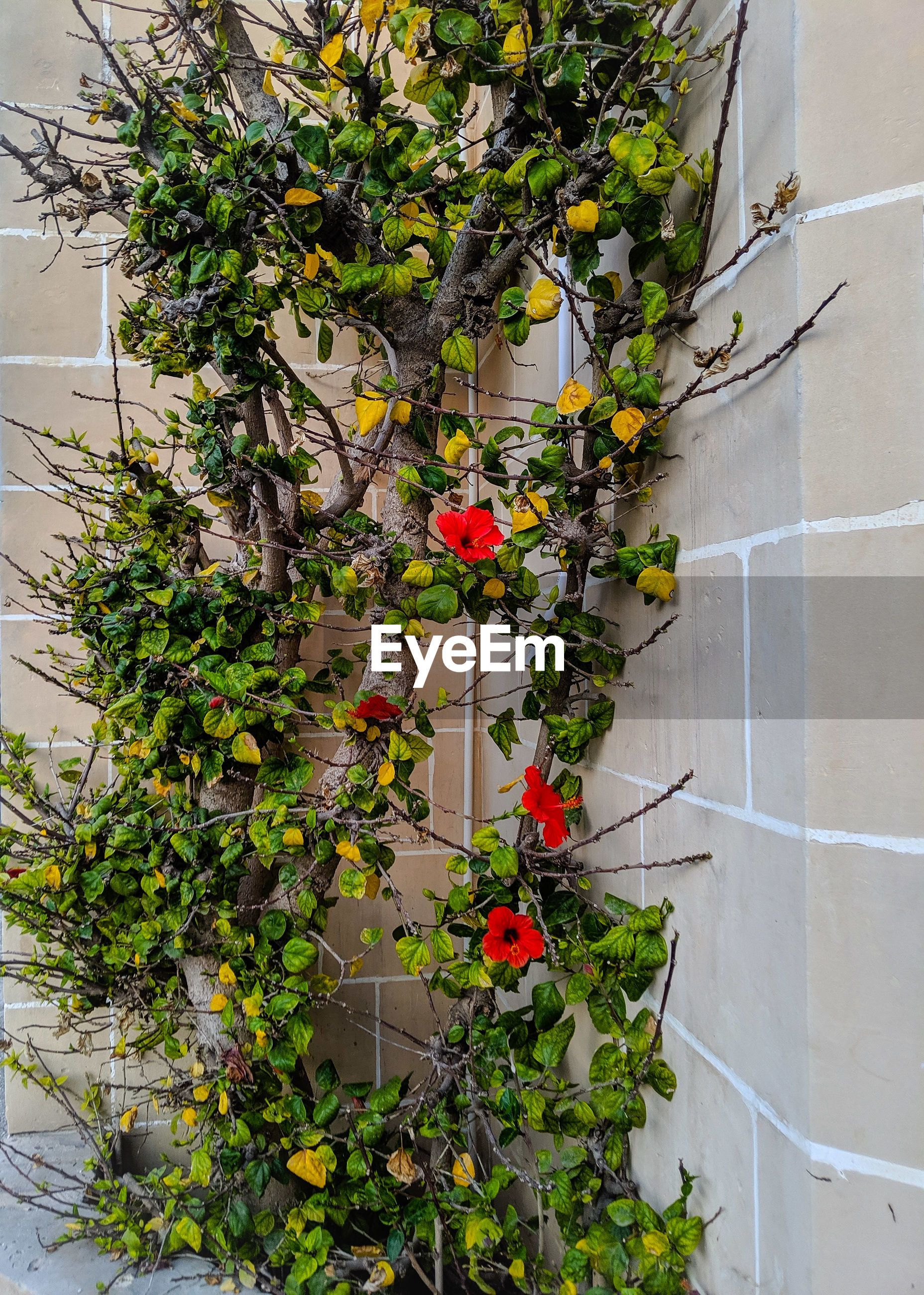 Flower plant growing on brick wall