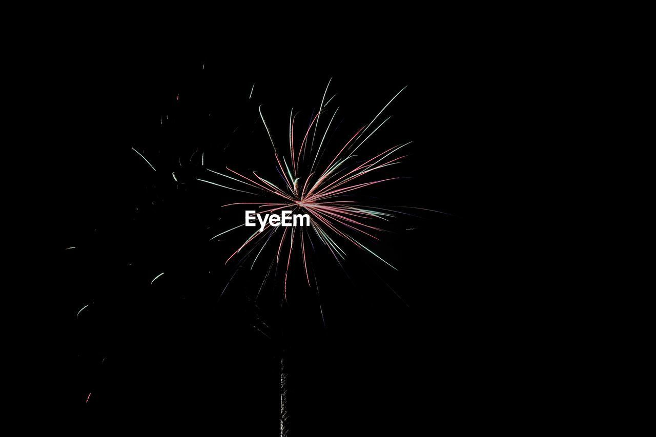 Low angle view of firework display against clear sky at night