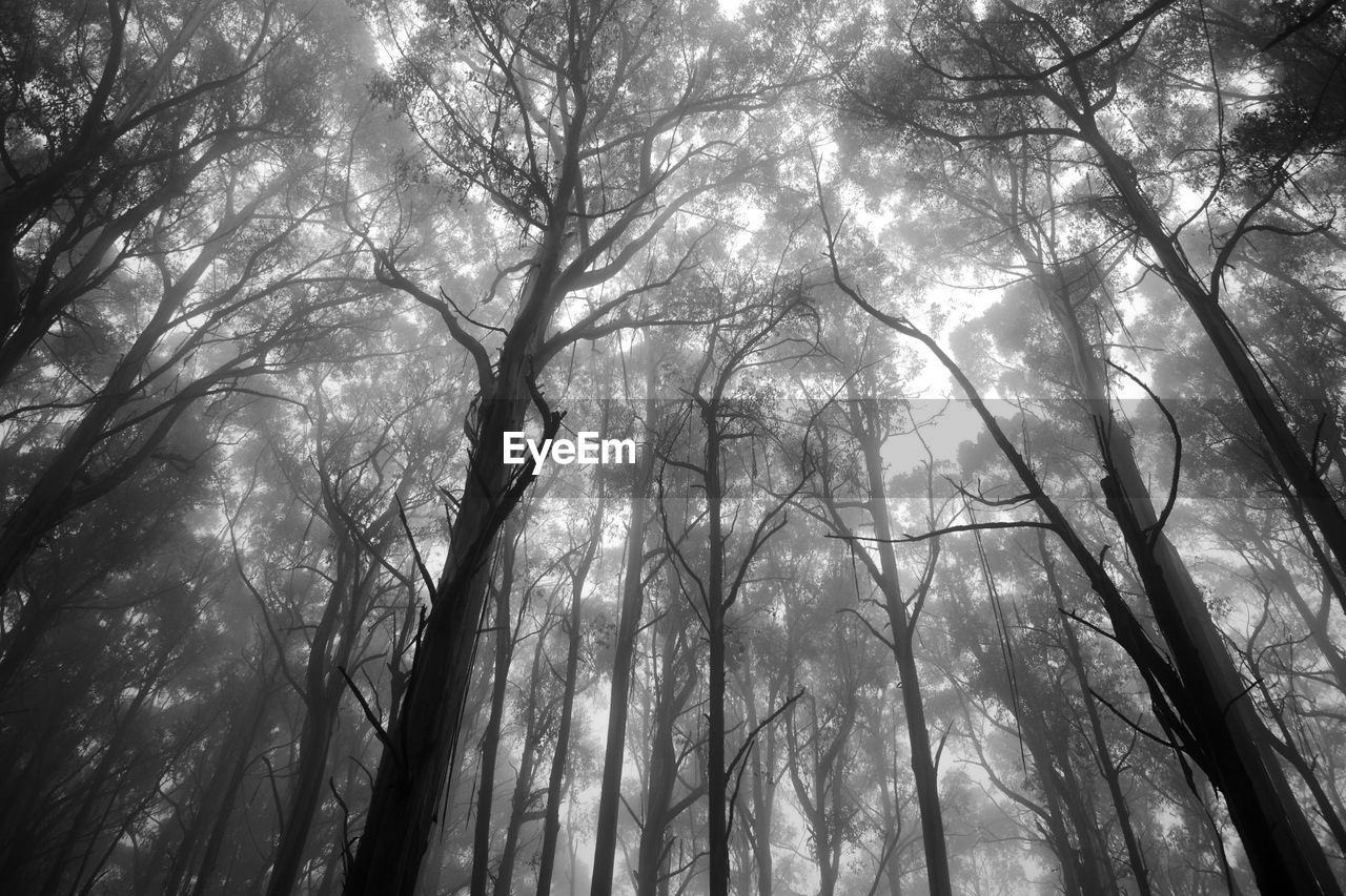 LOW ANGLE VIEW OF TALL TREES IN THE FOREST