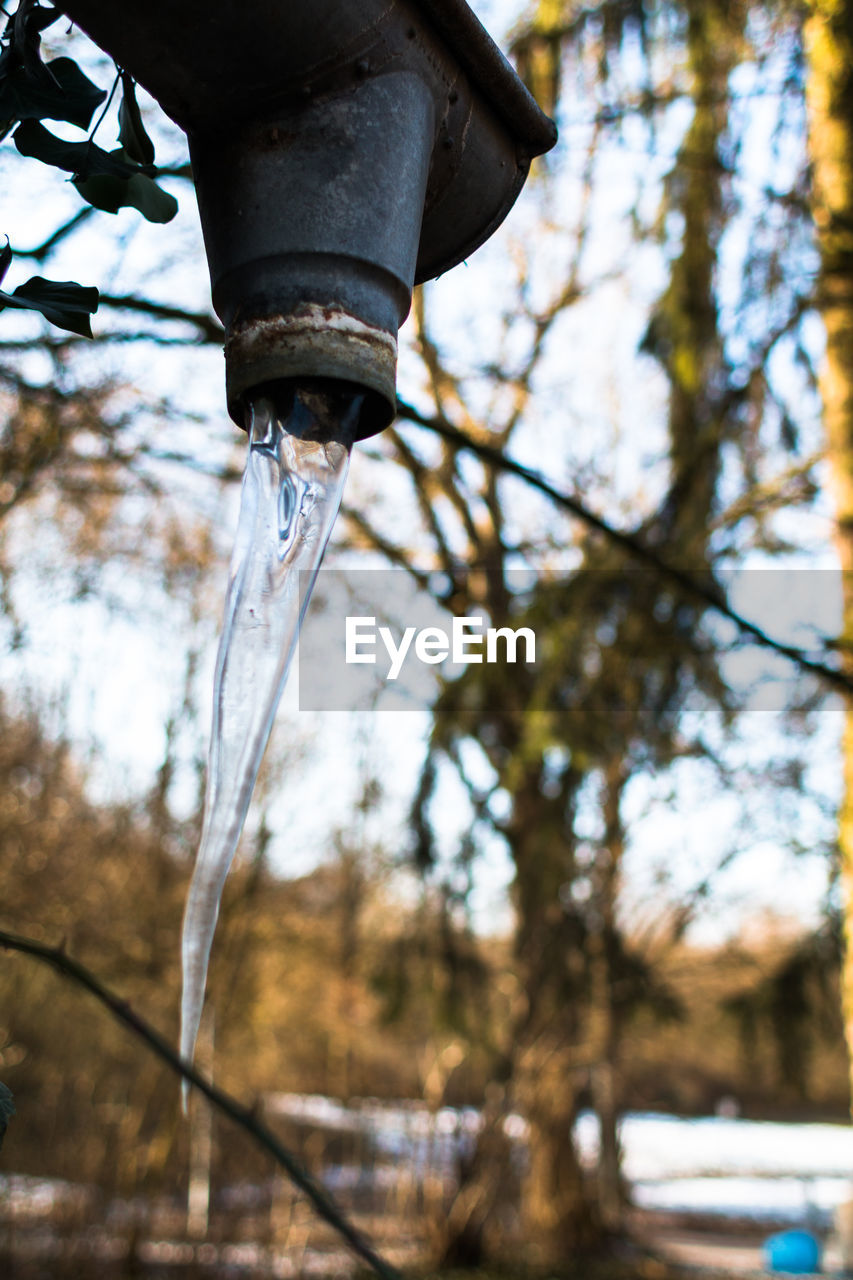 water, motion, dripping, fountain, drinking fountain, running water, tree, drop, focus on foreground, spraying, low angle view, icicle, outdoors, faucet, no people, day, long exposure, irrigation equipment, shower head, nature, close-up, cold temperature, tap, waterfall