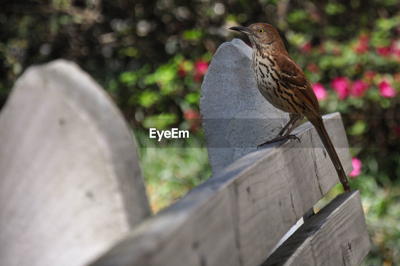 Bird perching on wooden bench at park