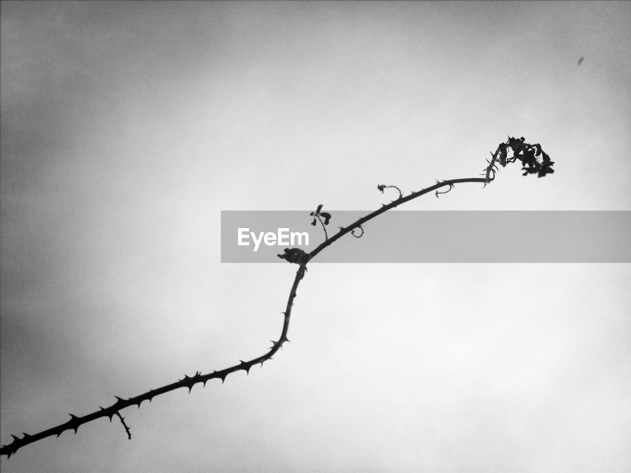 Branch with overcast sky