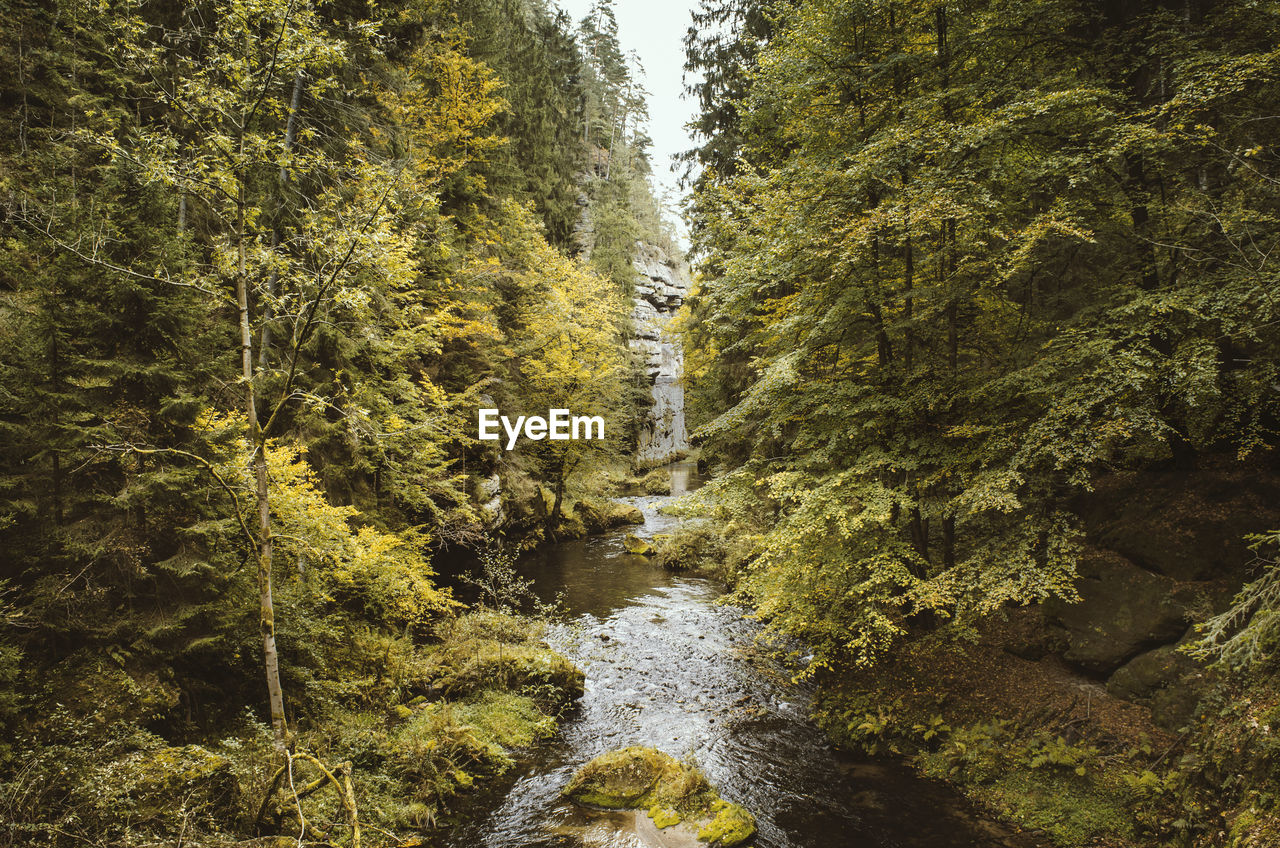tree, plant, forest, water, scenics - nature, beauty in nature, nature, land, no people, motion, flowing water, day, non-urban scene, growth, tranquility, green color, flowing, waterfall, long exposure, outdoors, stream - flowing water, rainforest