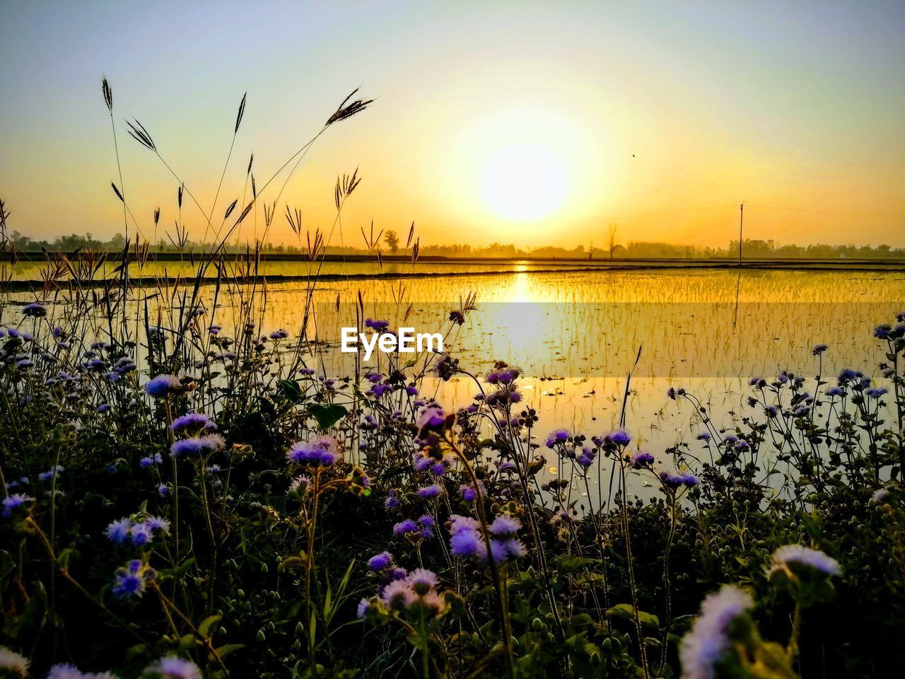 beauty in nature, sunset, sky, plant, flowering plant, flower, sun, scenics - nature, tranquility, tranquil scene, water, nature, growth, lake, no people, freshness, fragility, vulnerability, sunlight, outdoors