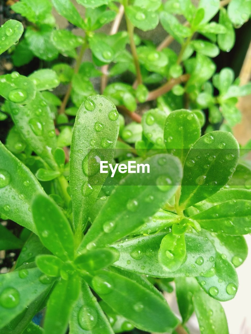 drop, leaf, green color, wet, raindrop, water, plant, growth, nature, freshness, close-up, droplet, weather, day, no people, beauty in nature, fragility, outdoors
