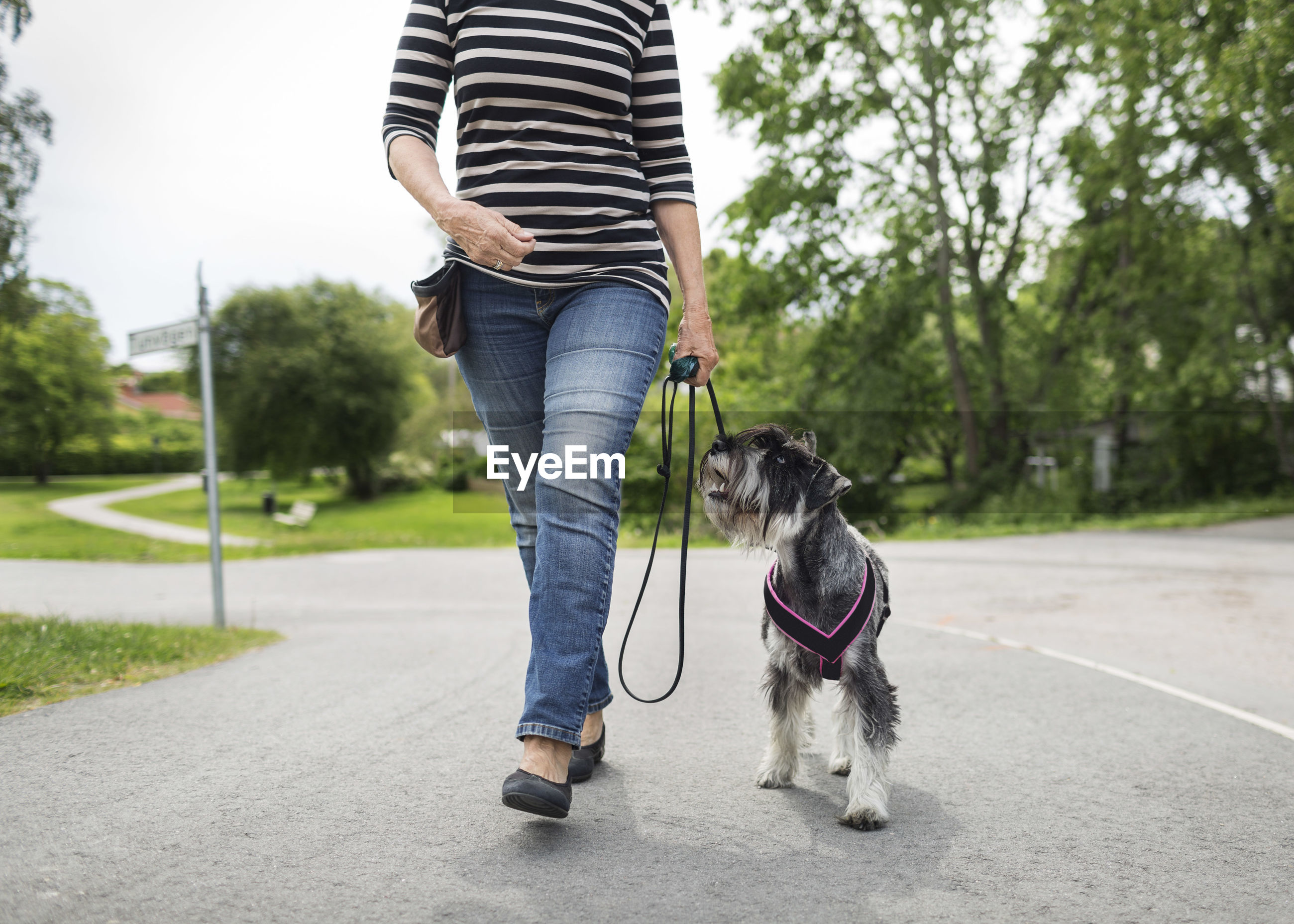 LOW SECTION OF PERSON WITH DOG STANDING ON ZEBRA CROSSING