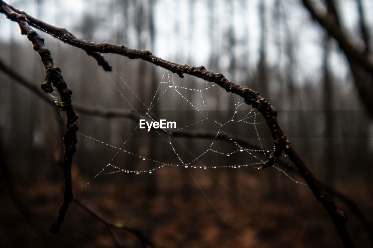focus on foreground, close-up, drop, no people, water, fragility, spider web, plant, nature, wet, day, twig, outdoors, vulnerability, tree, beauty in nature, selective focus, complexity, rain, raindrop, dew