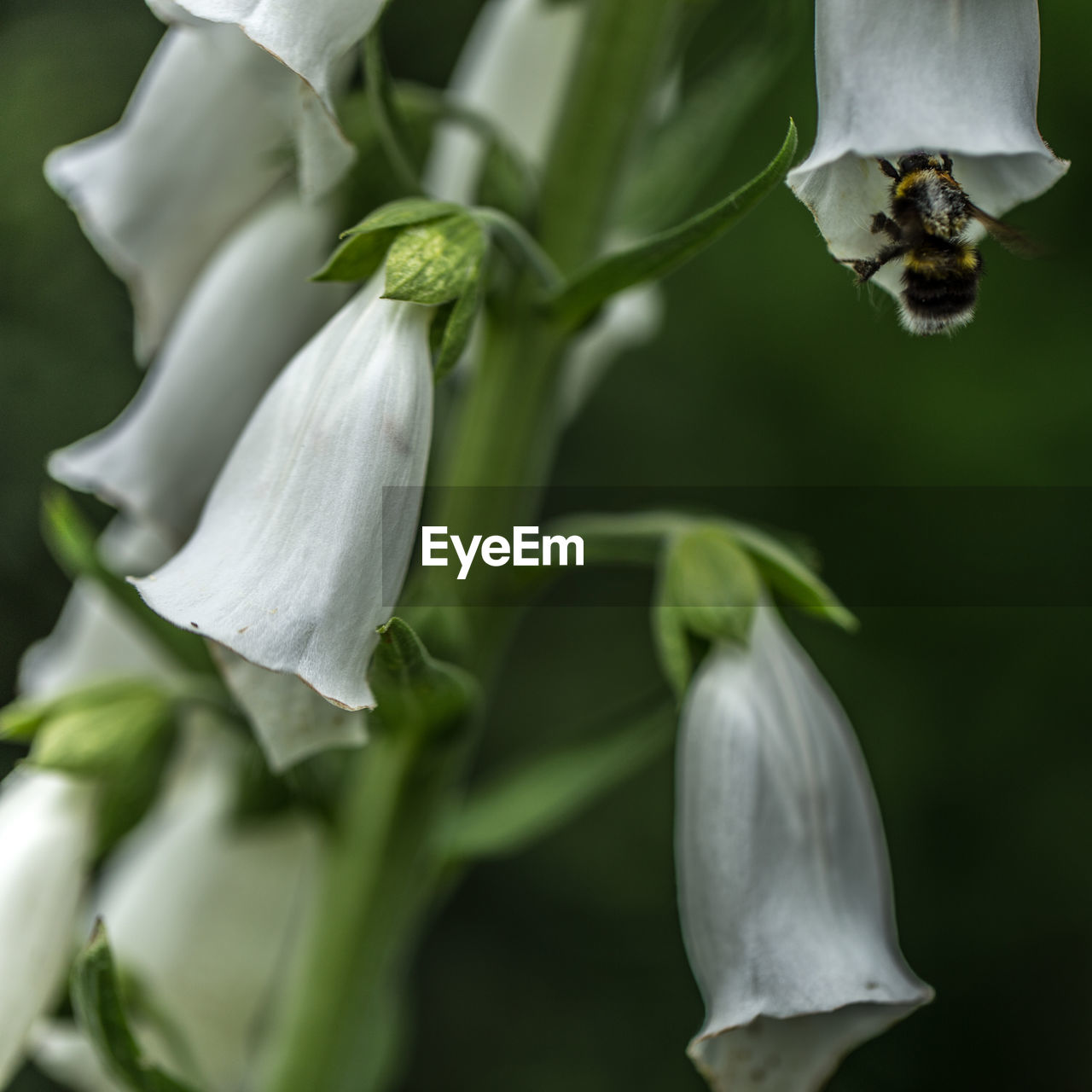 CLOSE-UP OF WHITE FLOWERS BLOOMING