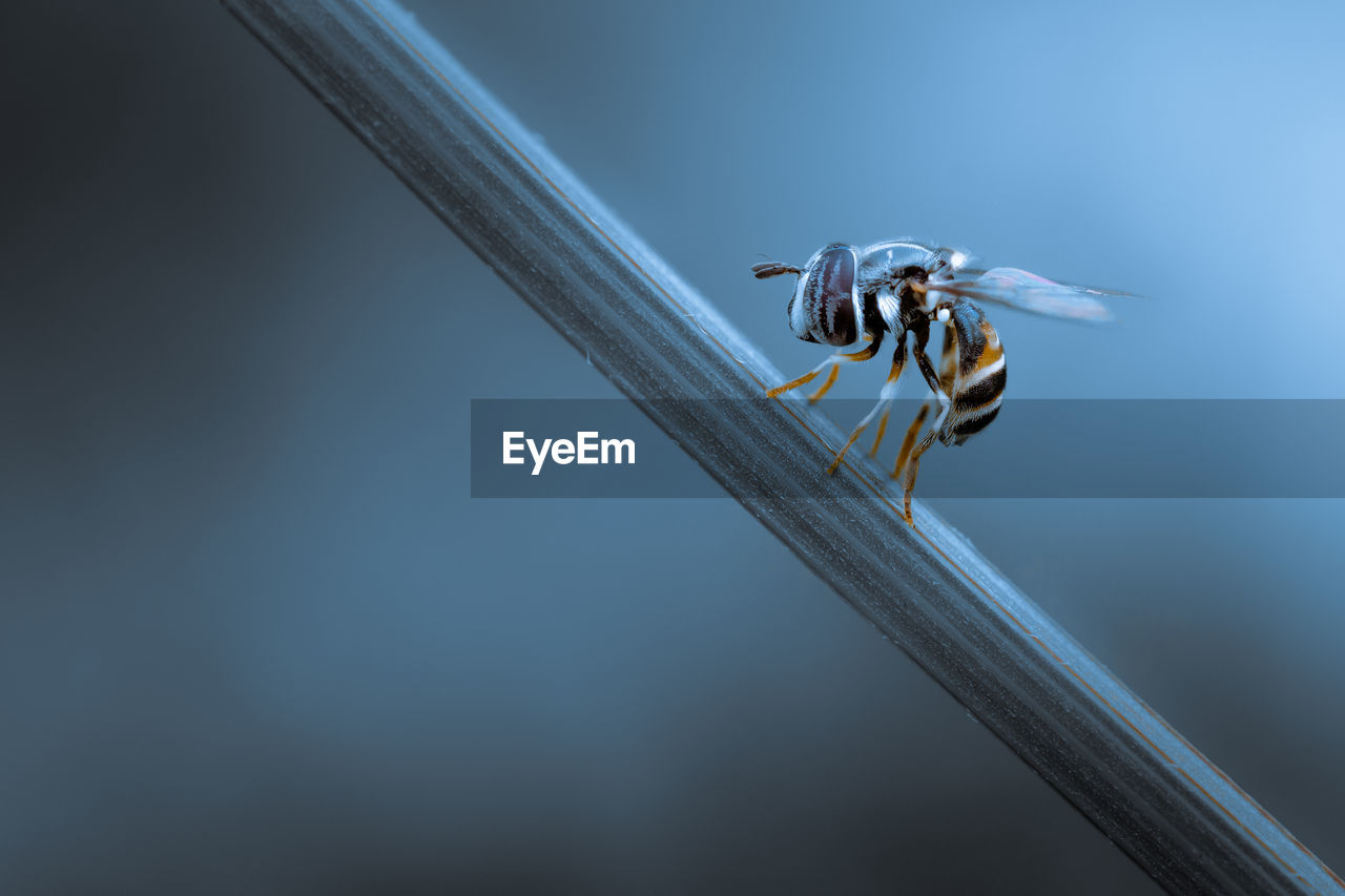 Close up of an insect sitting on plant stem