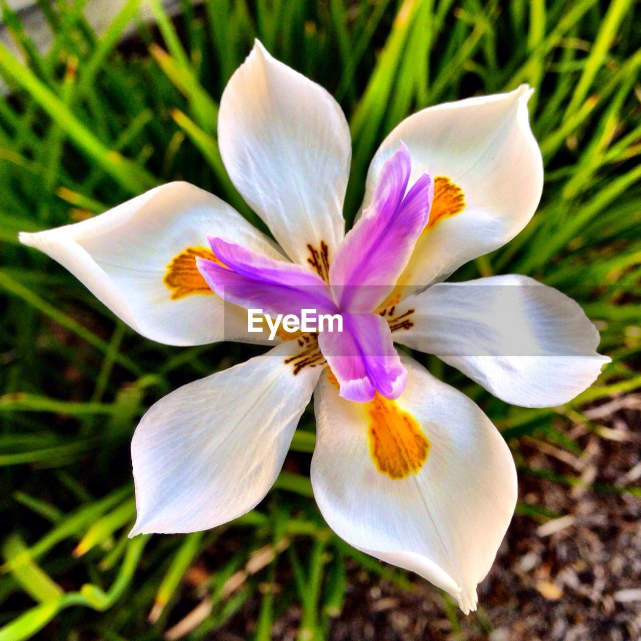 flower, petal, flower head, fragility, beauty in nature, growth, freshness, nature, plant, no people, close-up, blooming, day, outdoors, crocus