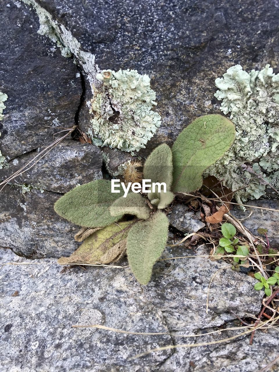 growth, nature, plant, leaf, day, no people, outdoors, high angle view, close-up, green color, fragility, beauty in nature, freshness