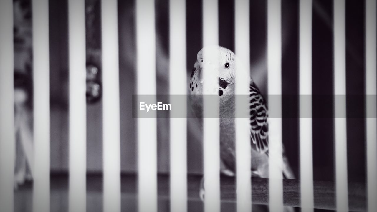 no people, animal, animal themes, focus on foreground, one animal, close-up, indoors, day, cage, mammal, animals in captivity, vertebrate, pattern, animal wildlife, striped, barrier, selective focus, boundary, domestic animals, small