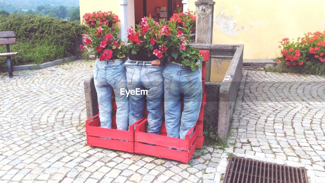 plant, flowering plant, flower, day, nature, one person, footpath, real people, lifestyles, casual clothing, leisure activity, red, outdoors, architecture, low section, body part, cobblestone, seat, men, jeans, flower pot, paving stone